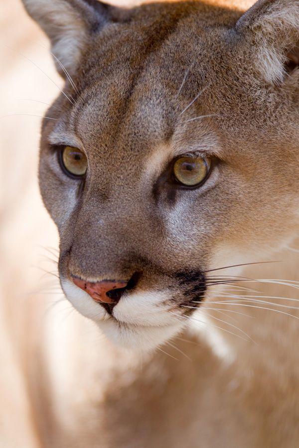 Les femmes avec des hommes plus jeunes : au-delà du mythe de la « cougar »
