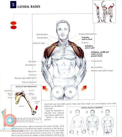 تمارين عضلات الظهر والكتفين بالصور