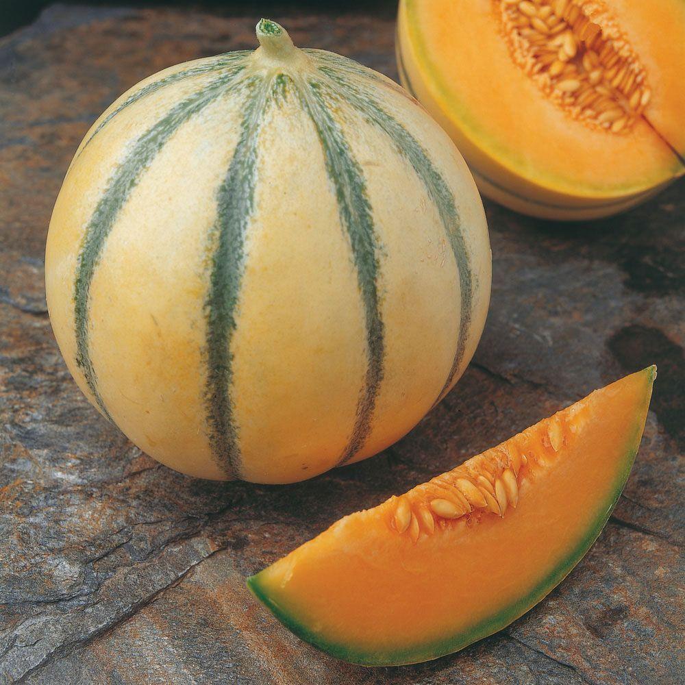 melon 39 alvaro 39 f1 hybrid all fruit seeds thompson. Black Bedroom Furniture Sets. Home Design Ideas