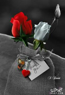 صور ورود 2020 اجمل صور زهور احلى صور ورود جميلة زينه Beautiful Roses Color Splash Photography Love Flowers