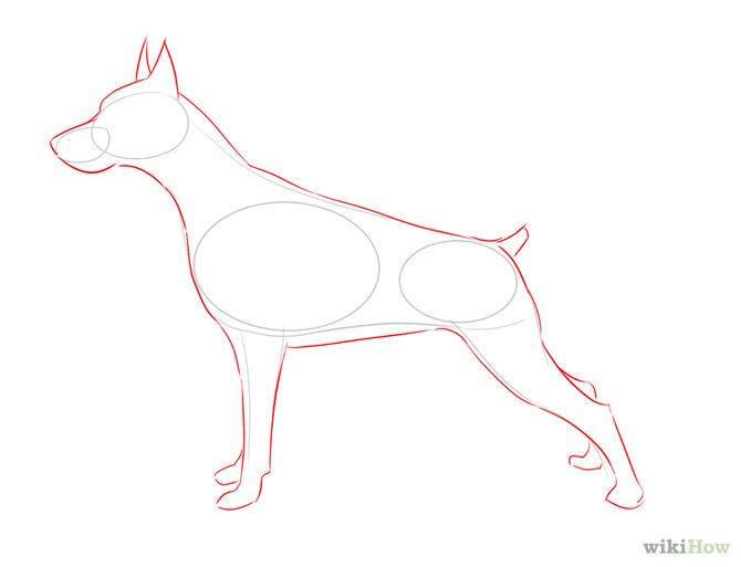 Como Dibujar Un Perro De Apariencia Real 5 Pasos Animal Drawings Realistic Drawings Dog Drawing