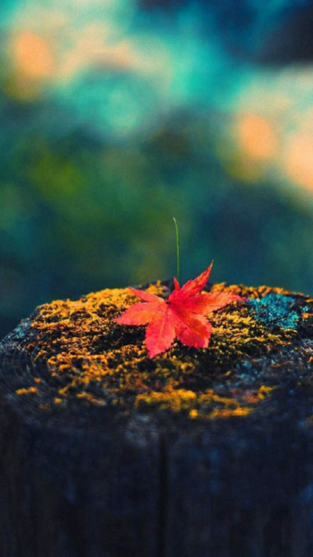Maple leaf cellphone wallpaper lock screen, Fall, Autumn