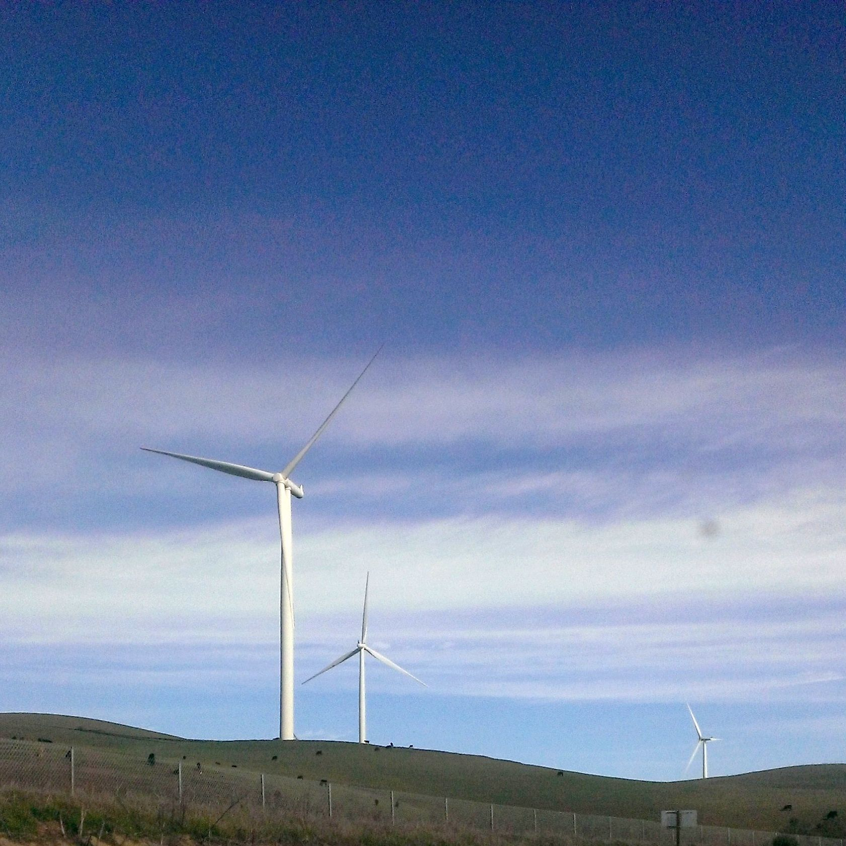 January 18, 2015 | Francessssca | Blue skies, grazing cattle, and a windfarm at the top of Vasco