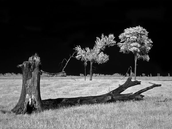 Infared photo tip ideal shooting conditions for infrared photography are often the exact opposite of those for visible light photography