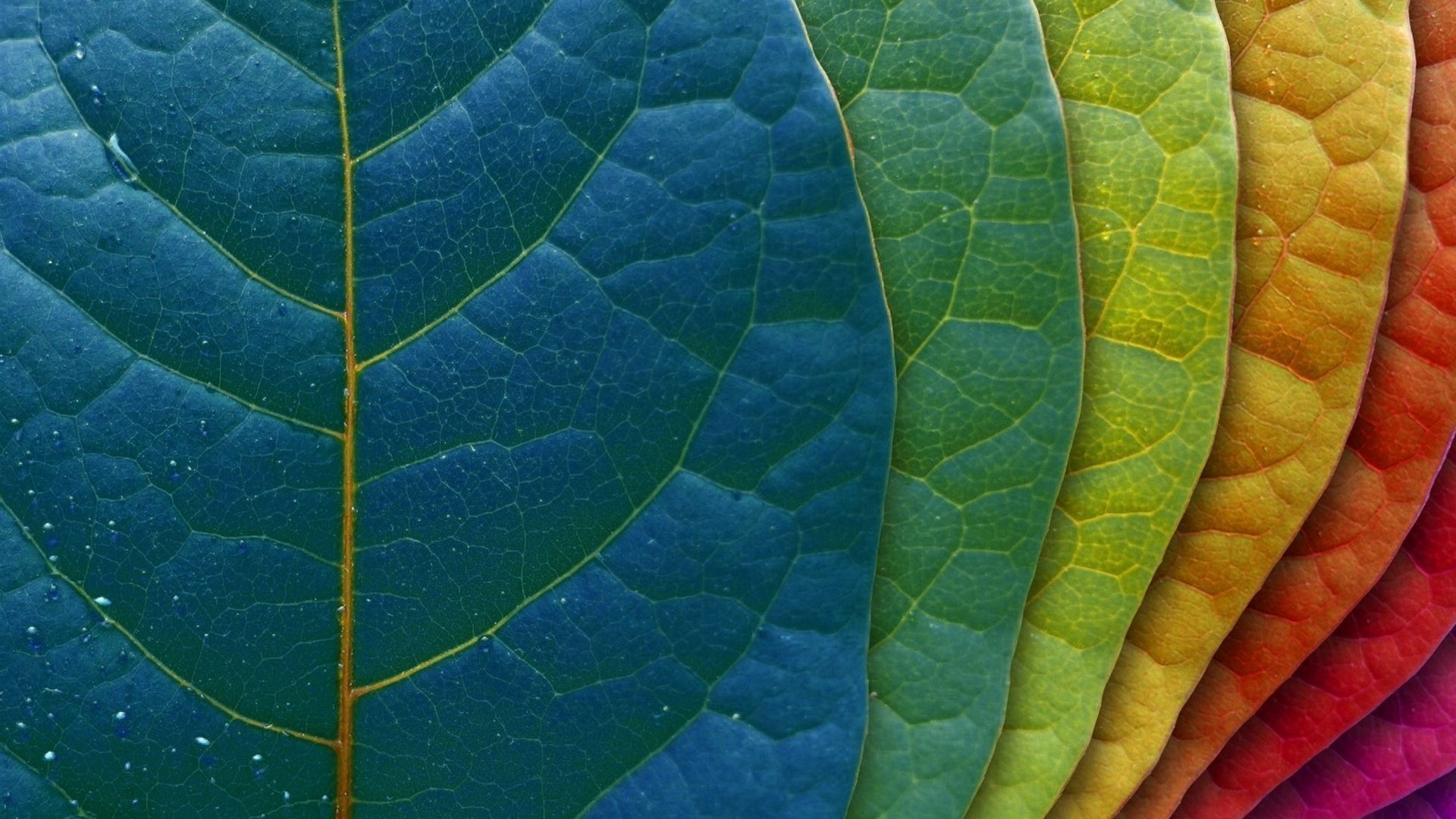 Colorful Leaves Wallpaper For Your IMac
