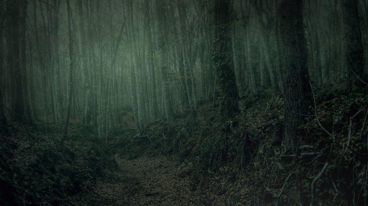 Dark Forest by Brizzolatto55 on DeviantArt