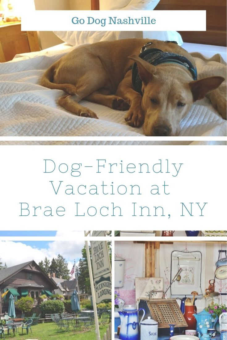 Toby S Big Vacation In Dog Friendly New York Dog Friends Dogs