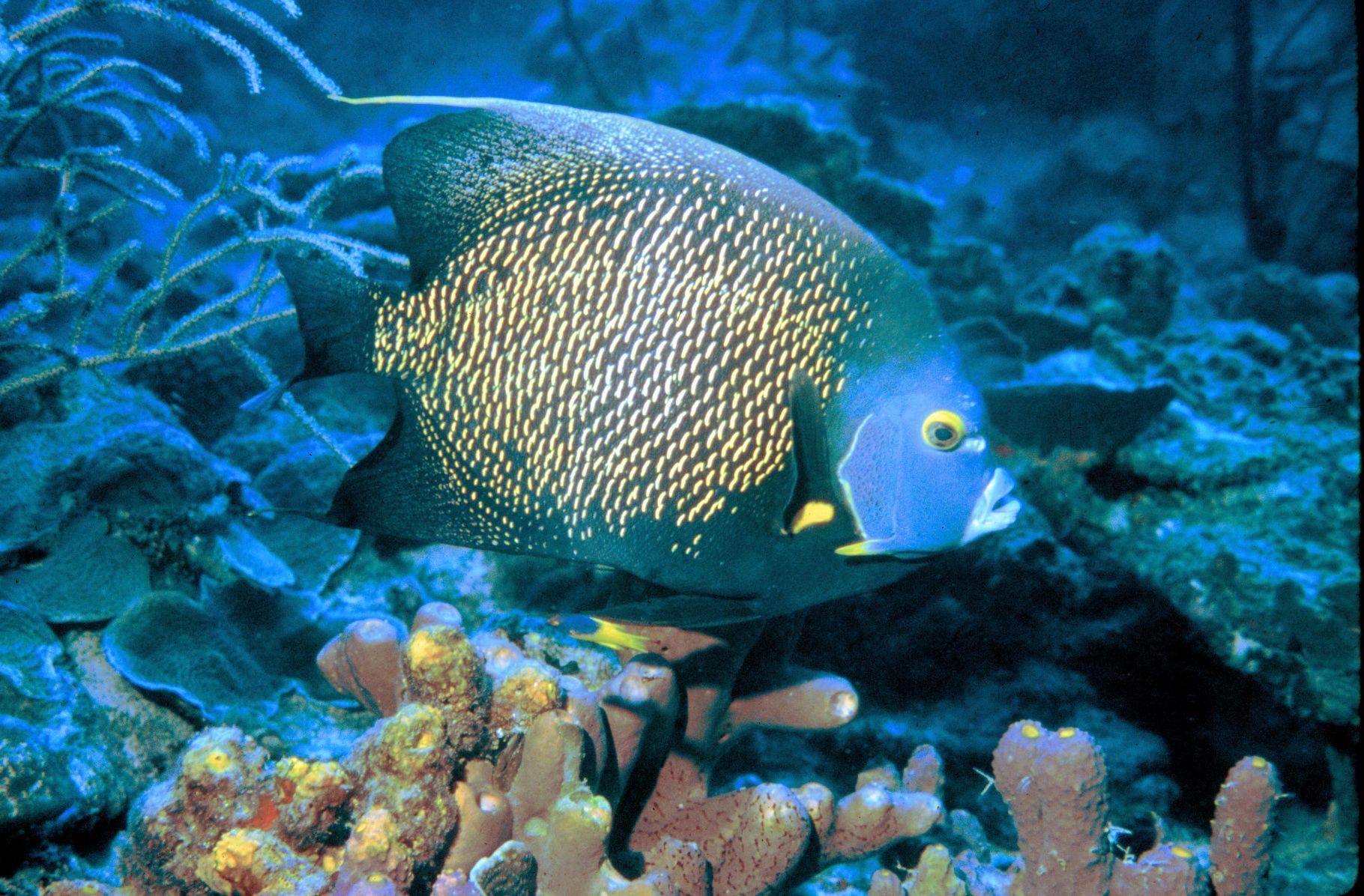 Der Regenbogenfisch mit seinen Glitzerschuppen