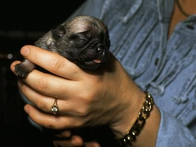 How Long Do Newborns Puppies Need To Drink Milk Newborn Puppies