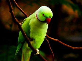 Life In Colour Parrot Wallpaper Color Of Life Parrot