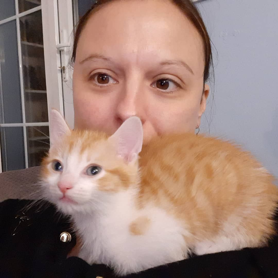 Everyone needs a bosom for a pillow ... This is Gingerbread-Latte our new #ginger kitten. No YOUR cats have stupid... #gingerkitten