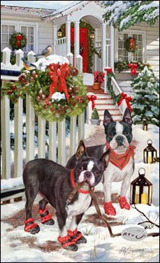 Boston Terrier Christmas Greeting With Images Boston Terrier