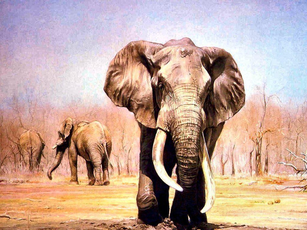 Hd wallpaper elephant - Elephant Wallpapers Hd Pictures One Hd Wallpaper Pictures Elephant Pictures Wallpapers Wallpapers