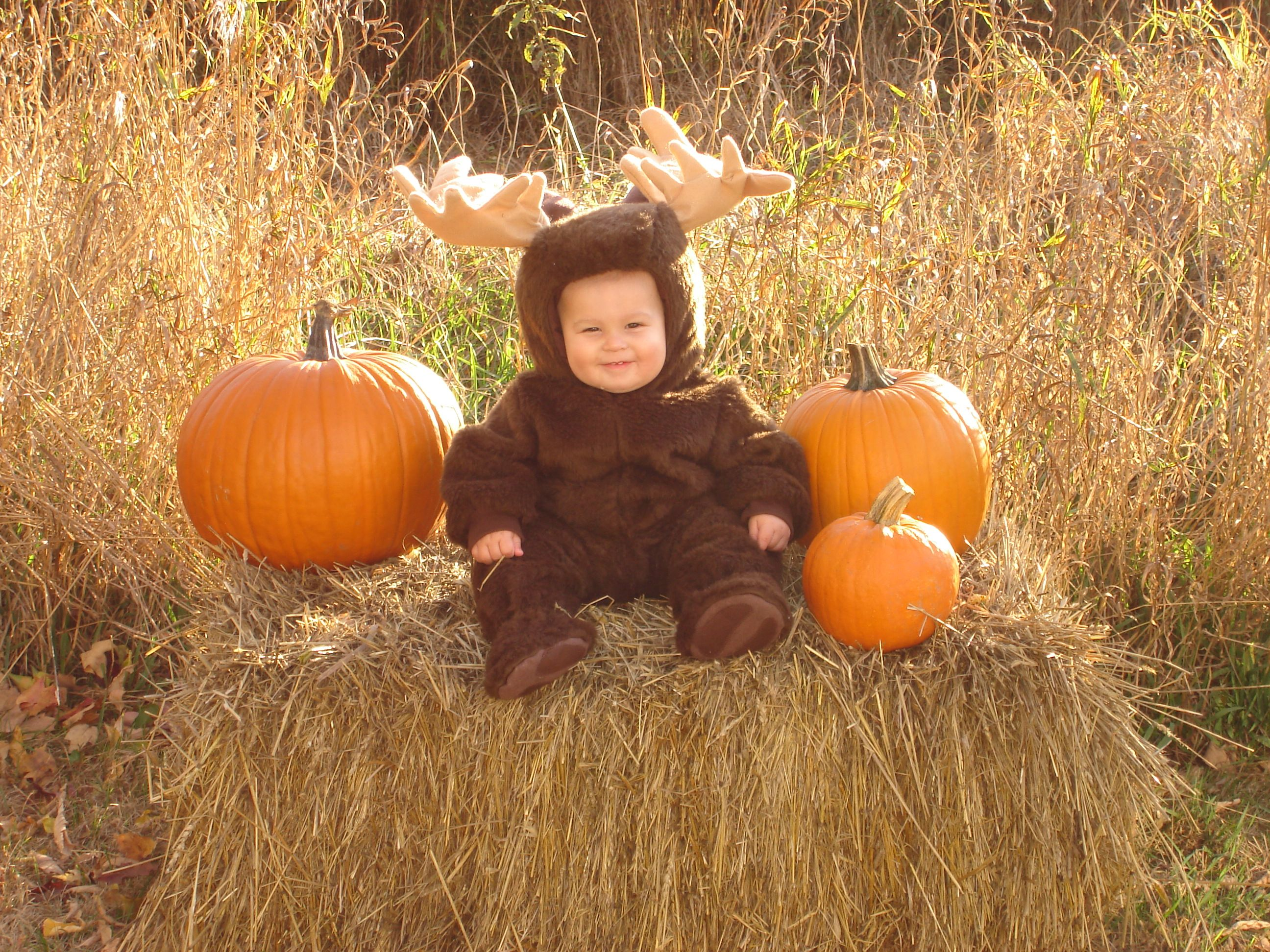 Image result for moose halloween costume