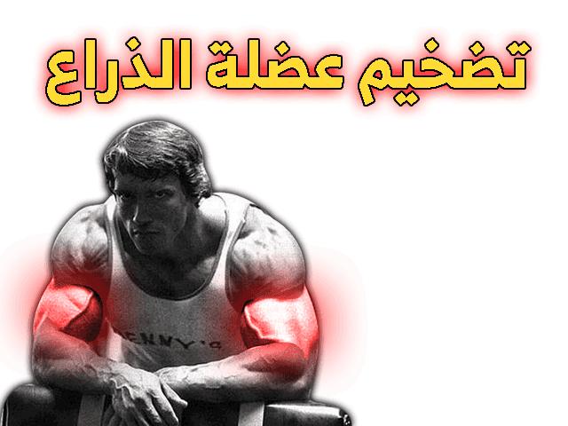 تمارين الباي والتراي بالصور Arm Workout Super Sets Bodybuilding