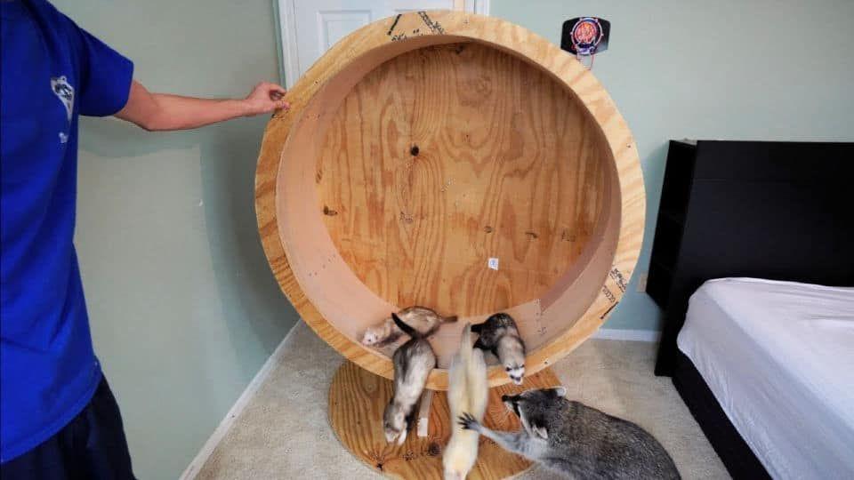 10 best diy cat wheel plans in 2020 cat diy cat