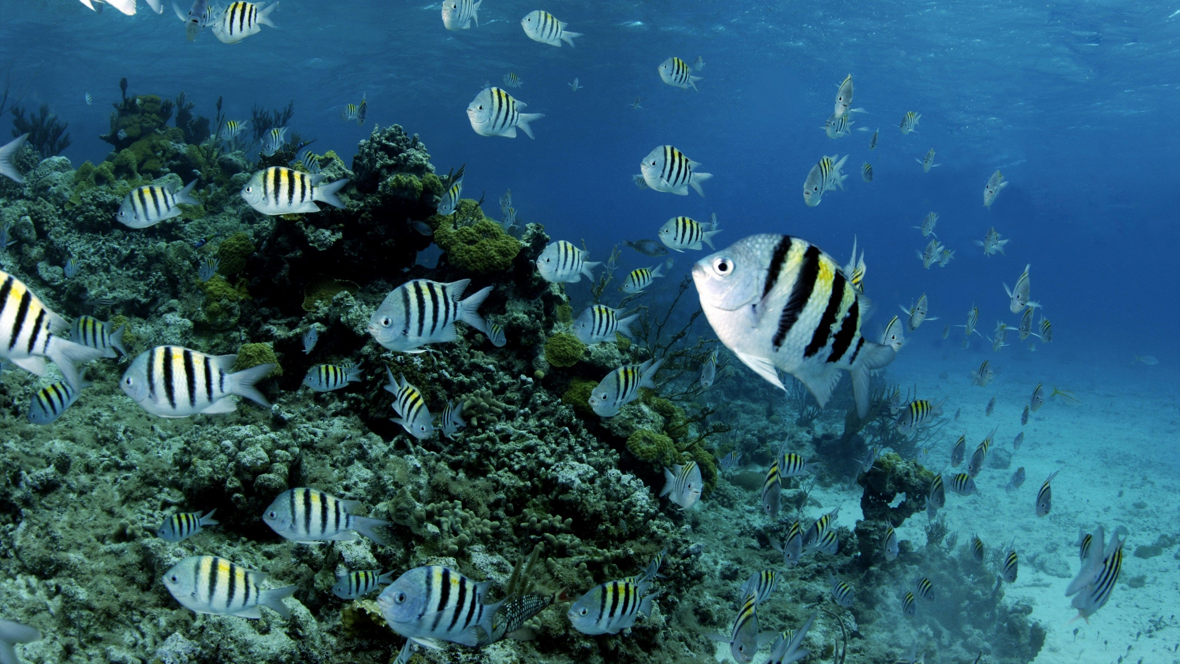 Hd Coral Reef Picture Wallpaper (With Images)