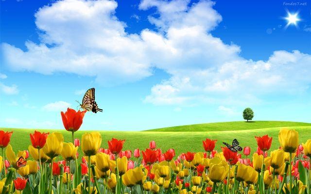 Windows Xp 1397679 Scenery Wallpaper Desktop Wallpaper Summer Spring Wallpaper