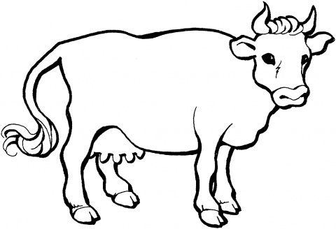 Cow Coloring Sheet | Coloring pages | Pinterest | Pre school