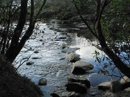 On my journey (river) there are plenty of stepping stones that represent experiences, challenges and resting places.