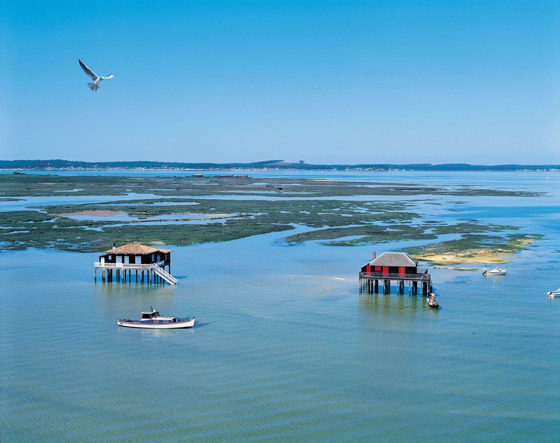 L Ile Aux Oiseaux Sur Le Bassin D Arcachon Bassin D Arcachon Arcachon Vacances En Gironde
