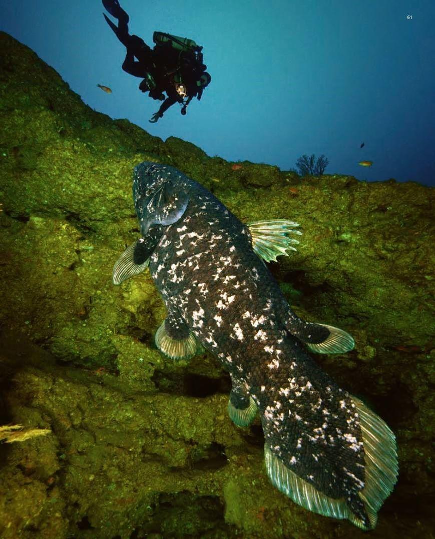 rencontre homme rebeu rencontre fish  L'inscription sur DIAL13 est gratuite, je suis tombée amoureux de.