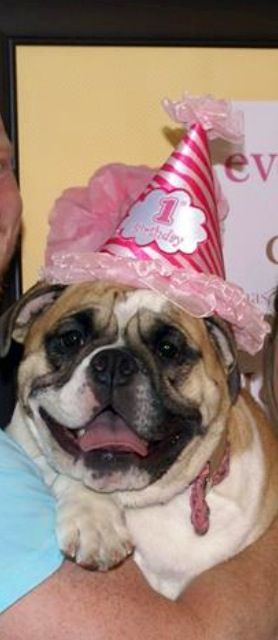Mollies 1st birthday paw-ty