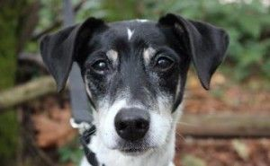 Snoopy Adopt Him Today At Seattle Humane Society Pets Adoption Best Dogs