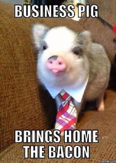 Business pig brings home the bacon