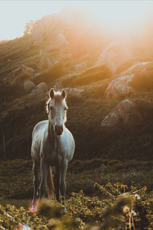 New Moon In Sagittarius Tarotscope Horses Horse Wallpaper Beautiful Horses