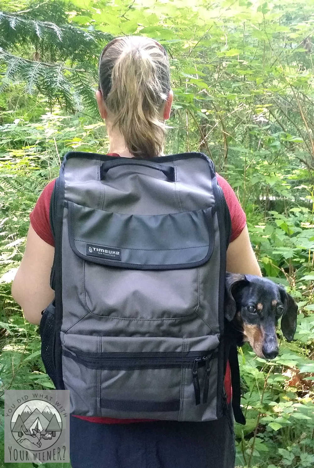 Backpacks For Carrying Dachshunds Dog Backpack Carrier Backpacks Baby Dachshund