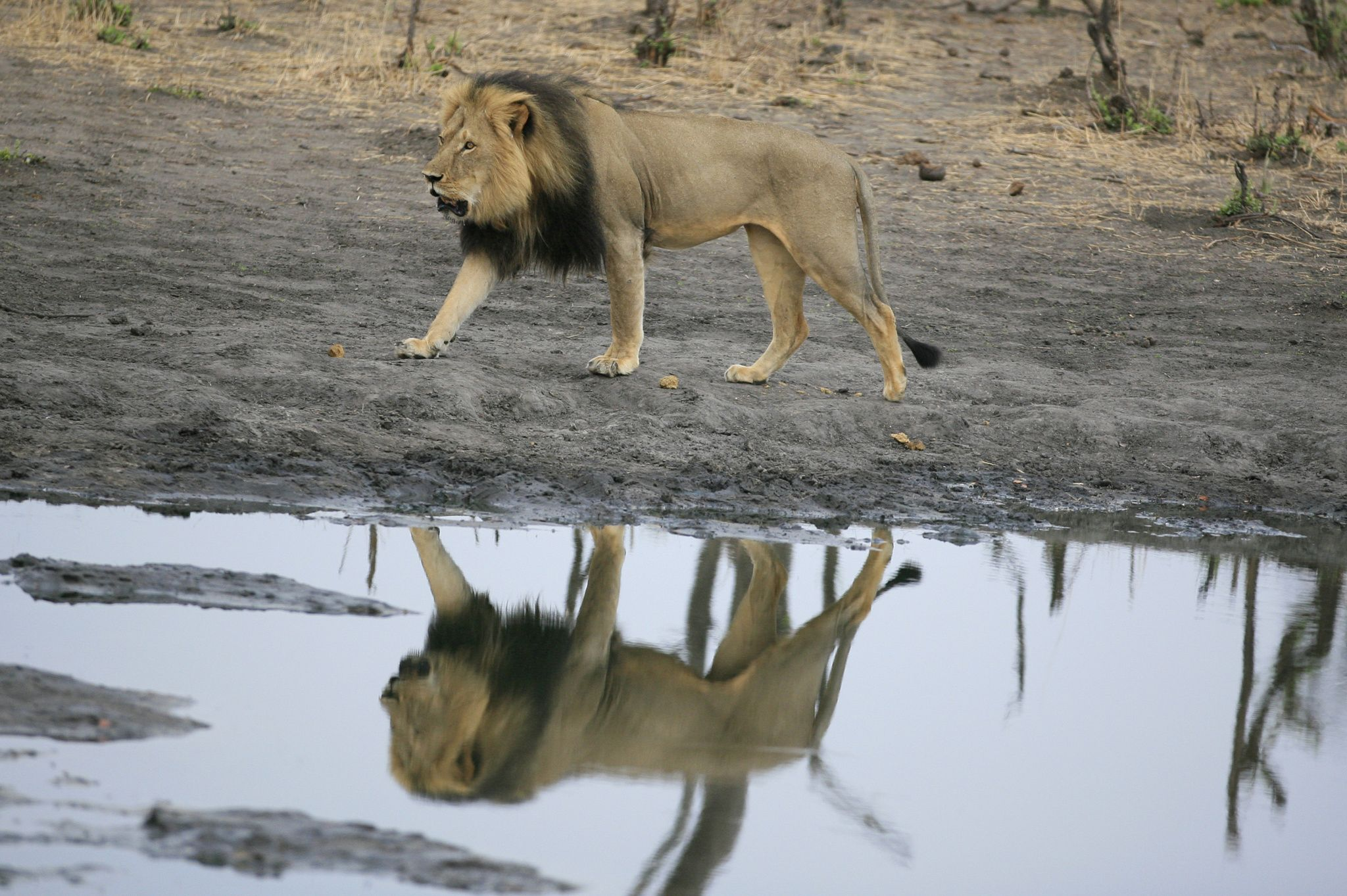 Photograph Reflections on Cecil by Brent Stapelkamp on