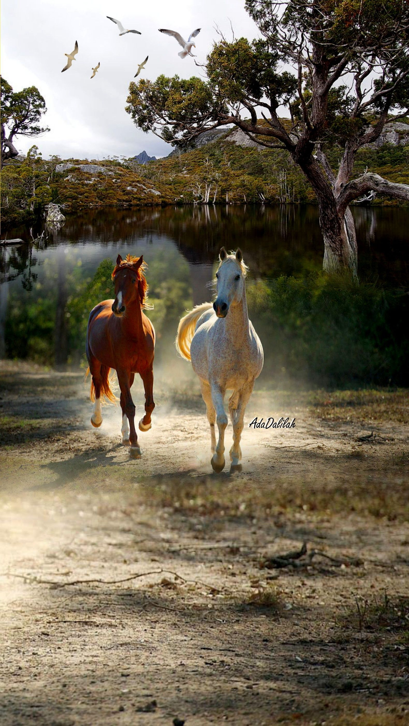 Pin By Ada Dalilah Rios On Horse Art Creative Montage With Images