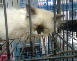 51 Koleksi Gambar Dp Wa Kucing HD Terbaru