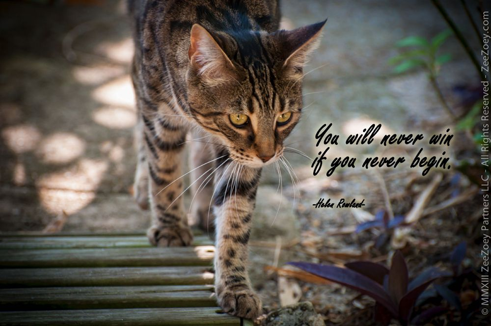Thank you to our Peanut for such simple, yet profound advice as we embark on a new year… http://zeezoey.com/blog/moving-into-the-new-year-and-taking-lessons-from-our-cats-along-the-way/