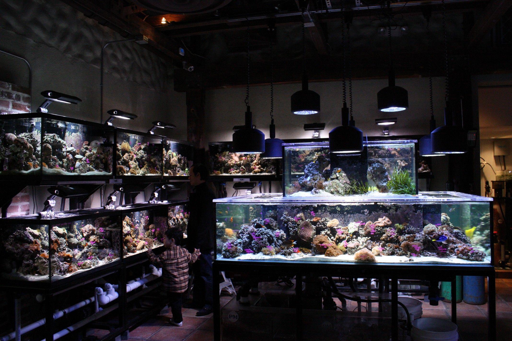 Local Fish Store Mixes Alcohol And Aquariums Aquanerd Aquarium Fish Gallery Aquarium Store