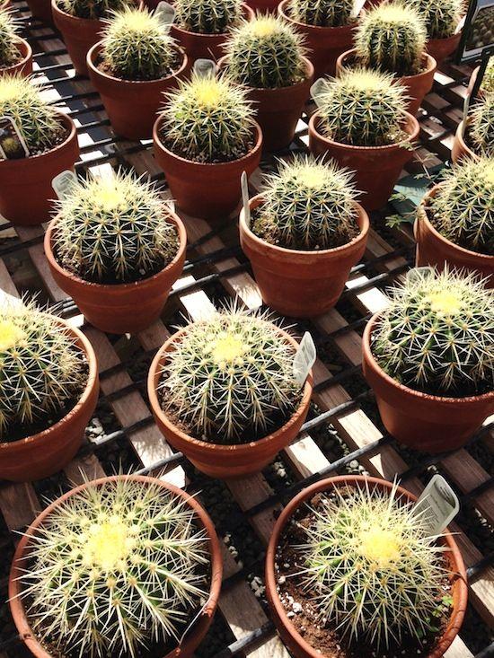 Le Cactus Fleuri Le Paradis Du Cactus A La Mode Montreal Avec