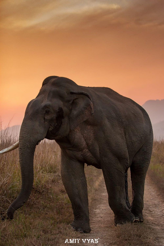 Pin de francisco garcia en AFRICA | Pinterest | Elefantes y Bonito