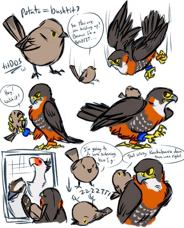 portal birds