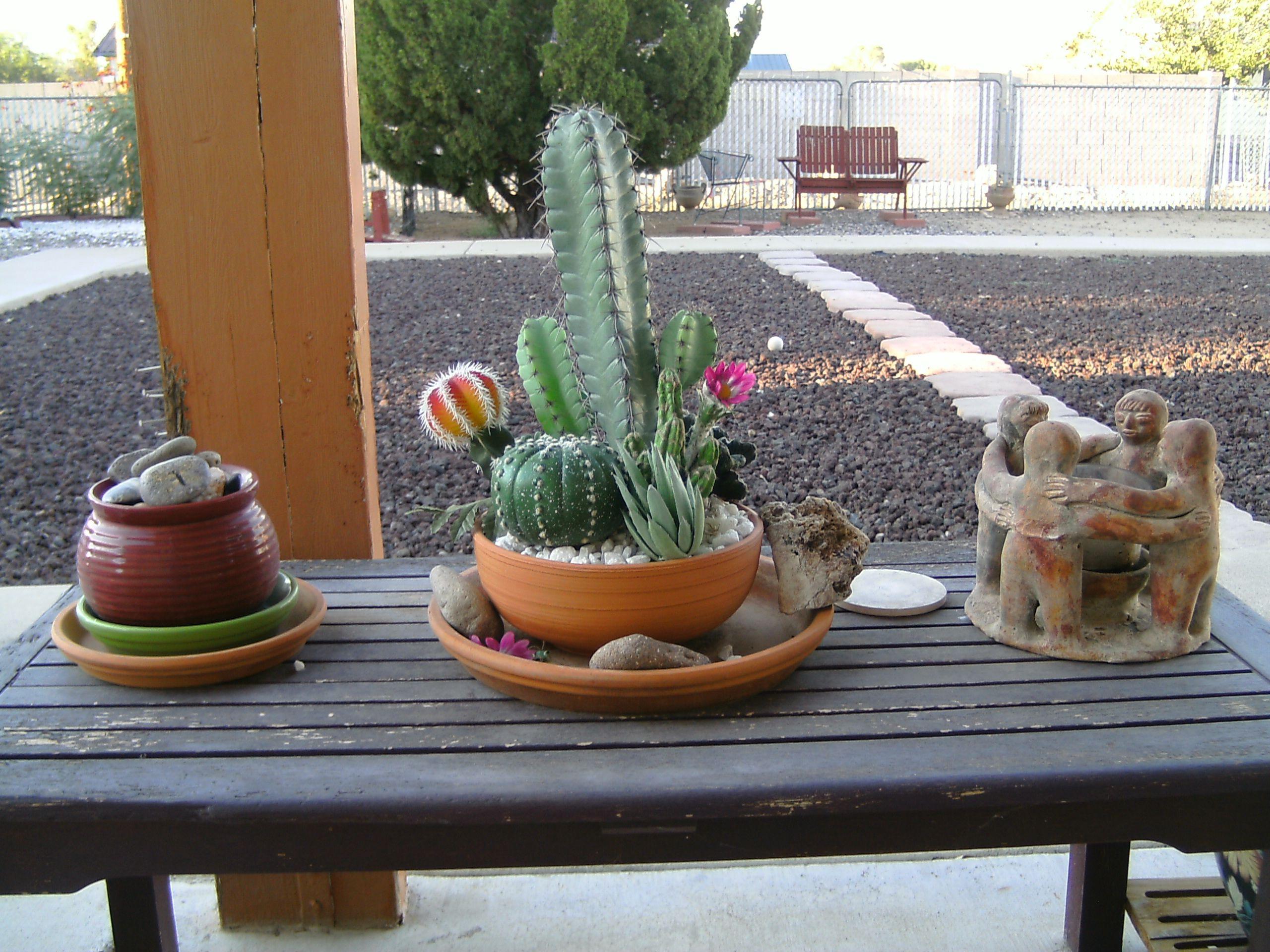 My mini-desert garden.