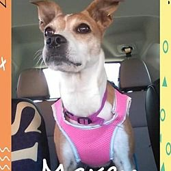 Available pets at Russell Rescue, Inc. in Columbia