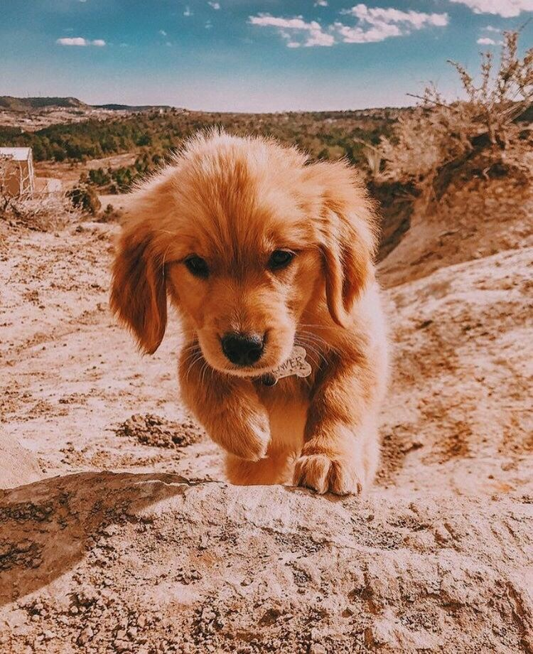 Vsco Goodvibes Vsco Puppies Cute Dogs And Puppies Cute Baby