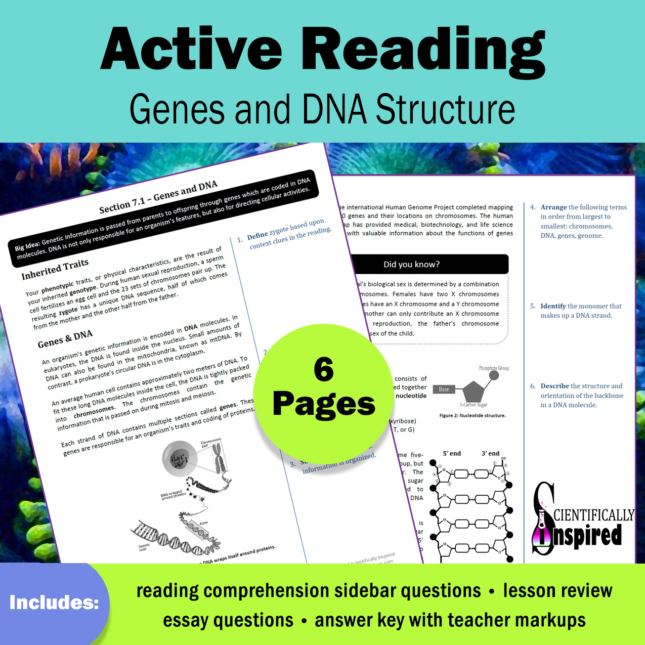 Active Reading Dna Structure