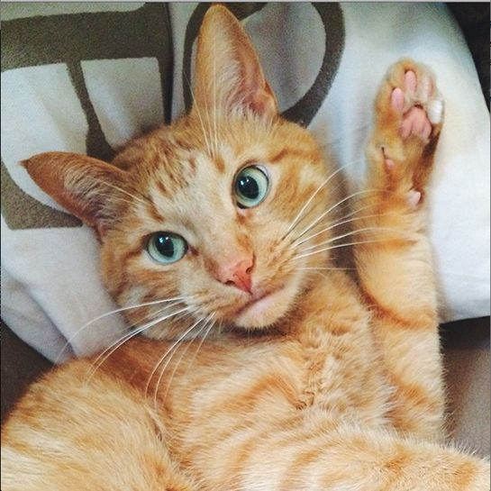 Behold The Internets Best Cat Selfies Cat Internet Cat And - The 10 best selfies in history
