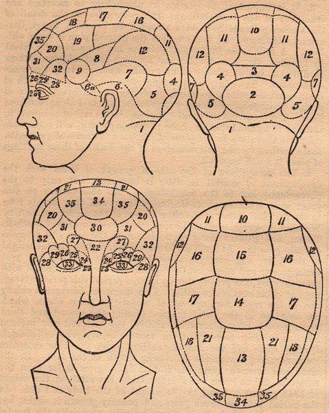 Old Phrenology Head Diagram Silvers Journal Ideas Pinterest