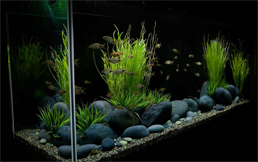Black River Rock 1 2 Per Lb On Sale 9 90 Fish Tank Plants Fresh Water Fish Tank Betta Fish Tank