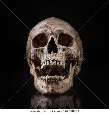 frontview of human skull open mouth reflect on isolated black background - stock photo