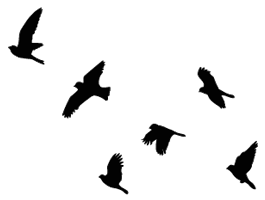 Flying Birds Tattoo | Flying Birds wall decals | Dezign With a Z  sc 1 st  Pinterest & Flying Birds wall decals | Pinterest | Wall decals Bird and Tattoo