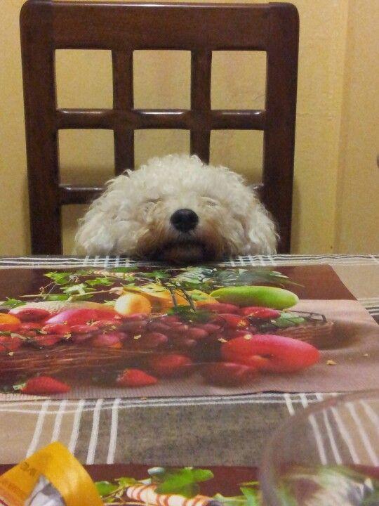 kala esperando la comida