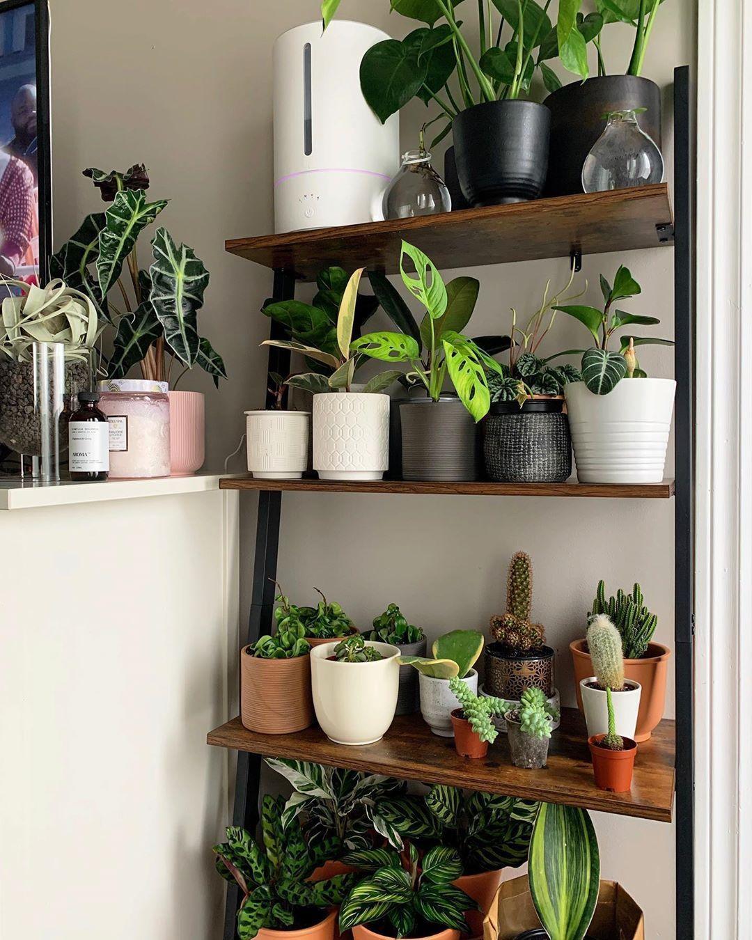 4 Tiers Wall Shelf Ladder Shelf in 2020 Plant decor